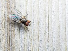 Fly on the wall (© nechaevkon / Fotolia.com)